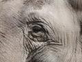 zoo14_011